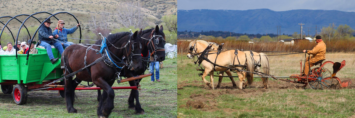 PLOWING BEE & HORSE SPECTACULAR - Union Gap, WA